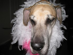 Her Royal Highness Queen Nova of Tripawds