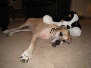 Everybody Needs Some Stuffy to Love!